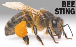 Bee-300x186