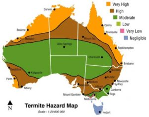 RIP Termite Pest Control Services