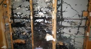 RIP Termite & Pest Control Services - Melbourne's No.1 choice for ALL Termite Control & Pest Control Services. Termite Treatments, Pest Control Treatments, Termite Inspections, Pest Control Experts