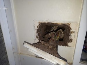 Termites create nest in wall cavity shorting out the power to this home