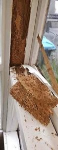 Window frame completely eaten out by termites.